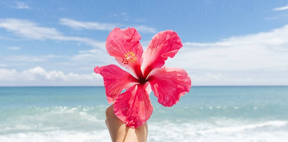 5 Amazing Benefits That Make Hibiscus The Botox Plant